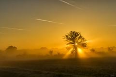 Tree at a misty sunrise (metsemakers) Tags: tree mist sunrise nederweert eind sony a7ii tamron