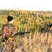 hunter in morning sun 2