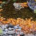 Molalla River in autumn