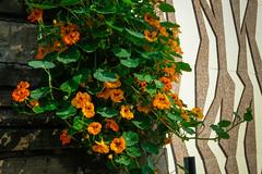 Sheboygan Fall Colors-16