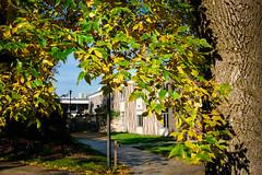 Sheboygan Fall Colors-14