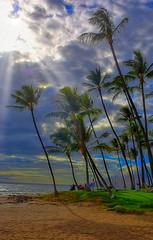 Keawakapu Beach (Kirt Edblom) Tags: maui mauihawaii kihei kiheihawaii hawaii beach sand gaylene wife milf tree trees tropical palmtree palm palmtrees water waves clouds cloudy sunlight sun sunburst rays waterscape bluewater pacific pacificocean landscape kirt kirtedblom edblom easyhdr hdr luminar nikon nikond7100 nikkor18140mmf3556 2018 evening