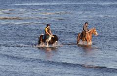 Sea Horses (Ken Meegan) Tags: seahorses kilmorequay cowexford ireland 1692018 horse sea paddling