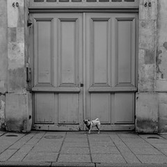 Le petit chien (Mister MG) Tags: nb street nancy chien porte fuji bnw blackandwhite streetphotography captures
