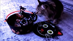 Kitty Cat's Trick or Treat (pianocats16) Tags: kitty cat cute fluffy love little pussy song video piano me playing singing halloween black cats treats glasses