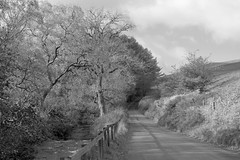 CountryRoad (Tony Tooth) Tags: nikon d7100 nikkor 35mm f18g bw blackandwhite monochrome road countryroad stream brook countryside wildboarclough cheshire england