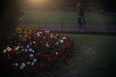 at dusk (ryo_ro) Tags: ilce7 sony a7 nokton 50mm f15 voigtlander vm cosina aspherical hibiya