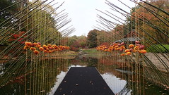 Japanse garden in Hasselt (Landanna) Tags: japansegarden hasselt belgium garden fall fallingintoautumn autumn herfst herfstkleuren efterår