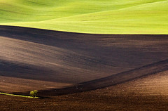Moravia (Darekdarecky) Tags: landscape springtime fields sunlight tree trees green czechia czechrepublik canon