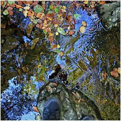 statte 15 (beauty of all things) Tags: belgien belgium hohesvenn solwaster statte wasser water herbst autumn laub leaves bach creek quadratisch