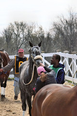 2016-04-10 (27) r3 #5 Synergist has her tattoo verified (JLeeFleenor) Tags: photos photography md maryland marylandracing marylandhorseracing laurelpark outside outdoors horses thoroughbreds equine equestrian cheval cavalo cavallo cavall caballo pferd paard perd hevonen hest hestur cal kon konj beygir capall ceffyl cuddy yarraman faras alogo soos kuda uma pfeerd koin حصان кон 马 häst άλογο סוס घोड़ा 馬 koń лошадь