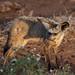 Safari Flickr (193 of 266)