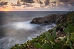 The Sicilian Dolphin. (Emykla) Tags: sea rocks rocce delfin dolphin nuvole clouds cielo sky onde waves sicilia sicily terrasini nikon d3100 fichidindia pricklypears