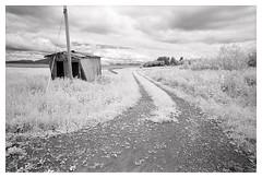 Austbø (2018) (phamnes) Tags: 35mm 135film slr norway austbø blackandwhitefilm ishootfilm filmphotography superpan200 rolleisuperpan rollei r72filter infraredfilm infrared sigma nikonf301 nikon