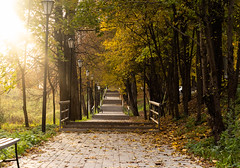 The path in the autumn forest (tina7shin) Tags: alley autumn background beautiful city colorful day fall landscape leaf leaves nature orange outdoor park road season street touristic town travel trees warm weather yellow