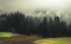 In the Light of the Moment (Netsrak) Tags: alpen baum bäume wald nebel wolken wolke berge kleinwalsertal natur landschaft