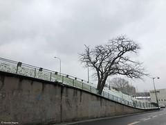 un-arbre-à-gentilly© (alexandrarougeron) Tags: photo alexandra rougeron neige urbain paysage nature paris