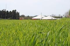 fattoria-la-piana_17212195747_o
