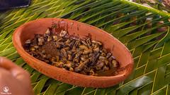 ulat-sagu-salah-satu-lauk-pada-festival-makan-papeda-kampung-abbar-6 (Agung Hari W) Tags: pulangkepapua abbar papeda papua sagu