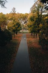 Di corsa al parco (matteoguidetti) Tags: parco park cittadella parma parma2020 trees man running city nature colors autumn autunno leaves alberi coloriautunnali