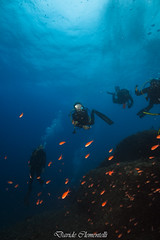 IMG_1331 (davide.clementelli) Tags: diving dive dives padi immersione immersioni ampportofino portofino liguria friends amici underwater underwaterlife sottacqua