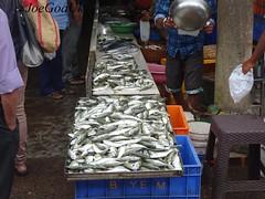 Panjim fish market (joegoauk73) Tags: joegoauk goa fish market wholesale road panjim panaji