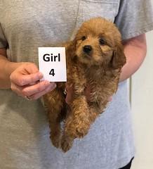 Kizzie Girl 4 pic 2 12-9