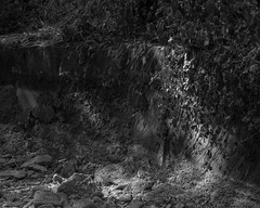 Drought (agianelo) Tags: river bank vine shade monochrome bw bn blackandwhite