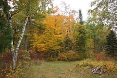 IMG_6329 (sjj62) Tags: fishcreekwi doorcountywi fall autumn woods doorcounty fishcreek 40d