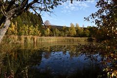 Littfeld - lake in the autumn light. (Beckerhenning) Tags: nikon d7200 sigma 1750mm herbst autumn lake see weiher schilf unlimitedphotos