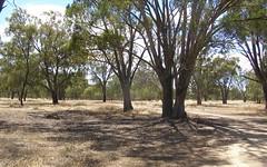 55 Old Deniliquin Road, Moama NSW