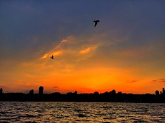 Istanbul | Turkey (maryduniants) Tags: redsky silhouettes birds sea clouds turkey sunset istanbul