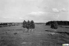 tm_5608 (Tidaholms Museum) Tags: svartvit positiv natur skog skorsten vulcan tändsticksfabrik
