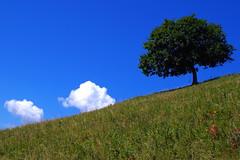 nuvole (enrico sprea) Tags: nuvole albero pianta montagna prato chioma cielo orizzonte montecornizzolo triangololariano lombardia italia brianza erba allaperto pentaxlife provinciadilecco prealpi prealpilariane prealpilombarde pascolo camminata trekking paesaggio campagna profilo sole ombra scosceso versantedellamontagna versante azzurro sereno