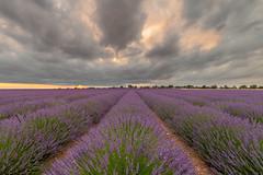 20180628- FRANZ Provenza - NIKON D750 - 00036-HDR-PSEdit (FrenkWhites) Tags: provenza provance provence lavanda lavande purple sunset tramonto