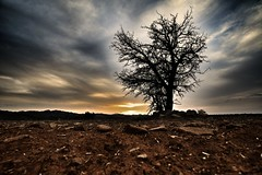 Sunset in Cyprus (16) (Polis Poliviou) Tags: nature green tree wood root agriculture plant outdoors cyprustheallyearroundisland cyprusinyourheart yearroundisland zypern republicofcyprus ©polispoliviou2018 polispoliviou polis poliviou πολυσ πολυβιου leaf field mediterranean oleaeuropaea sunsetincyprus flora grass environment healthy beauty afiap motherearth art agricultural soil texture rough postcard brunch grey brown season countryside organic ecology ecological winter lovecyprus autumn olivo ulivo sunlight light sun sunset sunrise fall