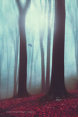 between (Dyrk.Wyst) Tags: landschaft schnee winter wuppertal atmosphere calm beechtrees chilly foliiage forest hike landscape misty mood nature outdoors trees wet woods backlight bird blue red forestfloor dreamy mystical abstract surreal