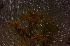 Star Trails 01 (PeMoDK) Tags: stars startrails night stella polaris low light photography sky sweden
