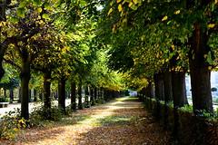 Fall (ericgrhs) Tags: fall autumn herbst alley allee bäume trees laub leaves blätter herbstlaub nature berlin schlosscharlottenburg schlosspark
