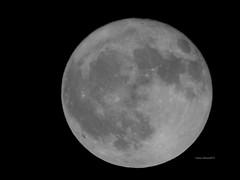 Hunter's Moon October 2018 (Anton Shomali - Thank you for over 1 million views) Tags: october moon harvest hunters 2018 huntersmoonoctober2018 hunter huntersmoon night nightsky bright full fullmoon october2018 nikon coolpix p900