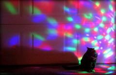 Happy Halloween (timetomakethepasta) Tags: happy halloween holiday night cat feline pussy pussycat kitty outdoors lights