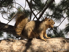 November 13, 2018 - A squirrel collects a meal. (LE Worley)