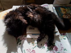 20180928 katten sover på köksbordet (Sina Farhat) Tags: katt cat hemma home mobile huawei p9 lite autumn fall höst table bord kitchen kök sleeping sover resting raw lightroom classic cc pet animal