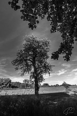 Gerahmter Baum im Westerwald (Bluespete) Tags: fc hüblingen psifotografie psi westerwald exif:lens=240850mmf3545 geocountry exif:model=nikond750 camera:make=nikon exif:make=nikon geostate geocity camera:model=nikond750 exif:isospeed=140 geolocation exif:focallength=24mm exif:aperture=ƒ11