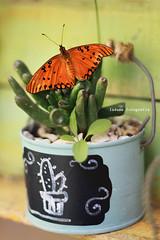 de primaveras y mariposas (.¸.·•●✿ ℓυ∂υєη ✿●•·.¸.) Tags: mariposa 50mm 50d canonef50mmf18 canoneos50d luduen luznatural