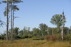 _IMG2470 (Henk de Regt) Tags: the netherlands gelderland natuur nature landscape grass bos forest trees zonsopkomst sunset sundown zonsondergang swamp nederland veluwe landschap gras water bomen moeras