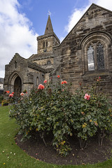 Rose bush (RagbagPhotography) Tags: standrews fife scotland cathedral harbour