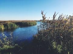 Narwiański Park Narodowy (basiamarcisz) Tags: river parknarodowy rzeka polska podlaskie podlasie narew