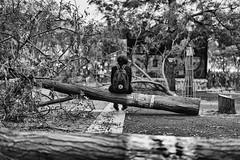 Game over... (JM@MC) Tags: marseille protest laplaine zeiss milvus trees urban