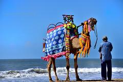 Waiting (Joy lens) Tags: camel sea rider business wave sky landscape india joydeep